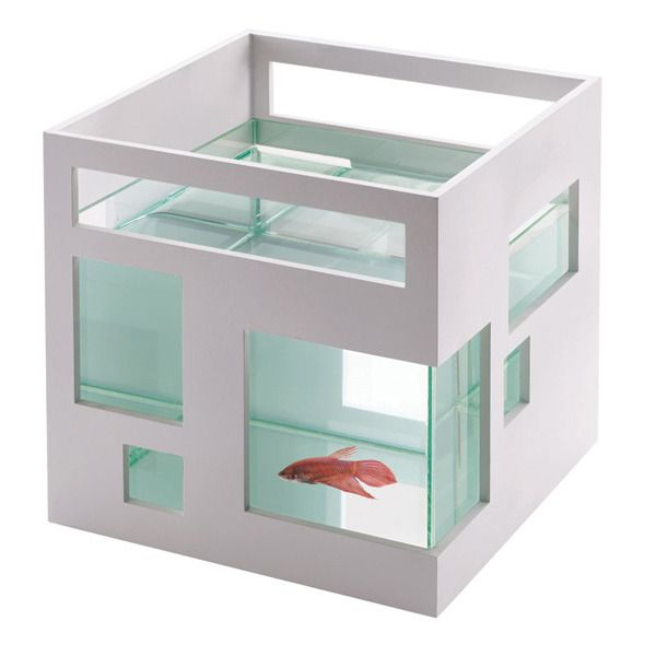 This makes me want a fish. I would name it Wilefred.