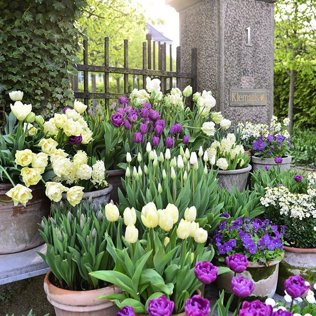 33 Beautiful Flower Beds Adding Bright Centerpieces To: 455 Best Tulip Planting-ideas Images On Pinterest