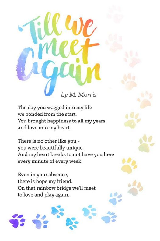 We had this poem commissioned for anyone and everyone has experienced the pain of losing a beloved pet. Share this with anyone that needs to hear it :) #RainbowBridge
