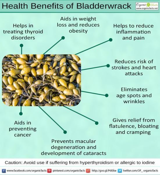 Benefits of bladderwrack supplements