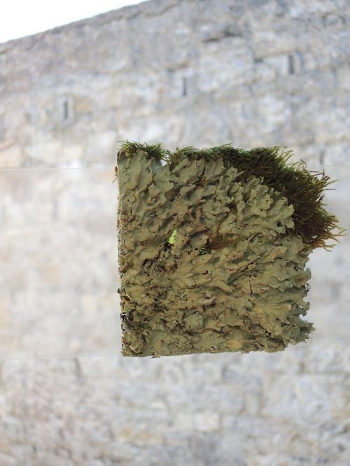 GibsonSaidhbhín_Green on green