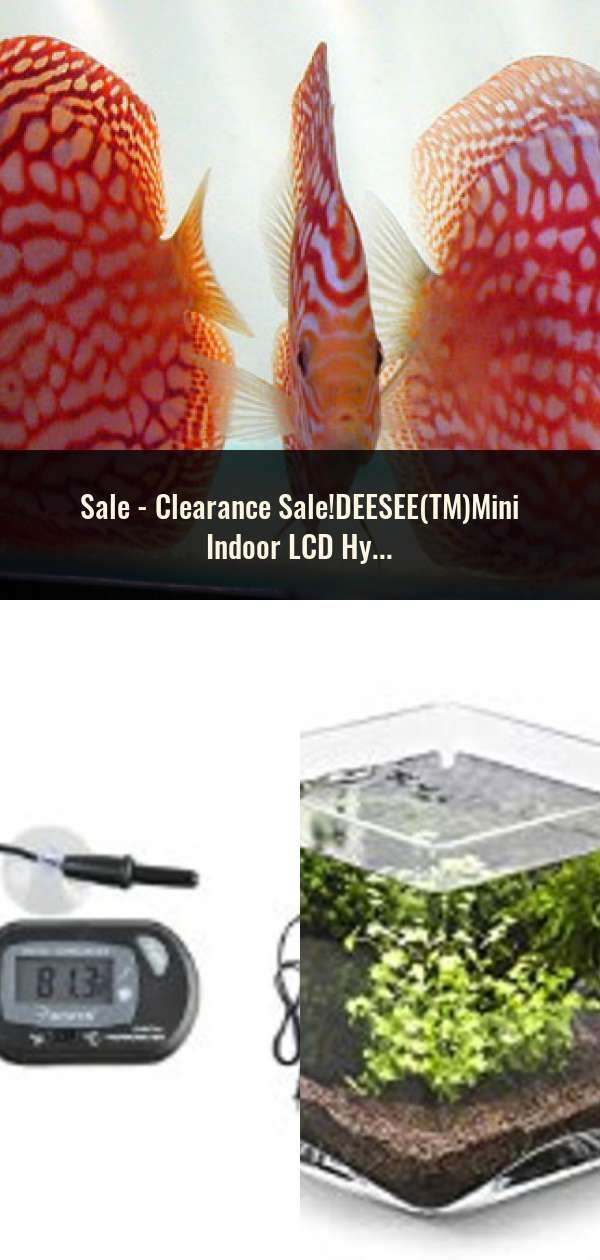 TM Clearance Sale!DEESEE