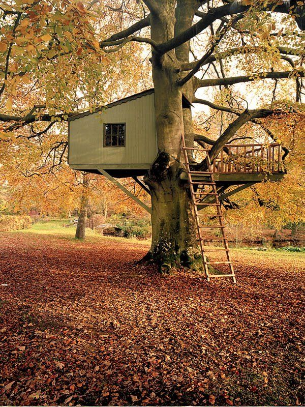 **http://www.collthings.co.uk/2009/03/cool-treehouses.html