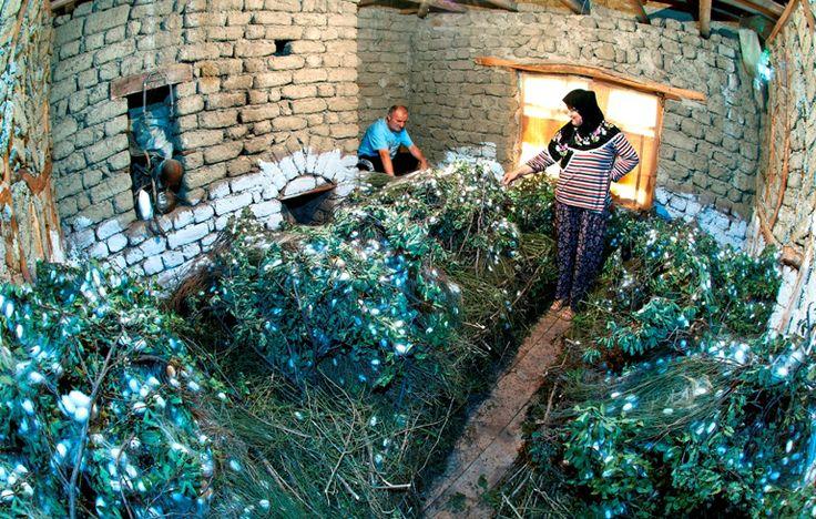 İpek böcekçiliği, İnhisar, Bilecik, Türkiye