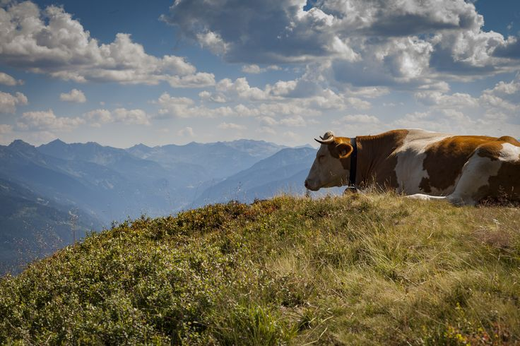 the holy cow of austria by Mircea Bunea on 500px