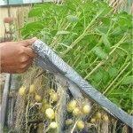http://belajarberkebun.com/cara-membuat-tanaman-hidroponik-dan-contohnya.html Berbagai hasil sayuran bisa didapat dari cara hidroponik ini seperti selada, sawi, caisim, kemangi, paprika, tomat cabe, dan lain-lain.