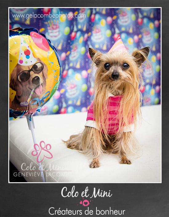 17 Best Images About Party Yorkie On Pinterest For Dogs