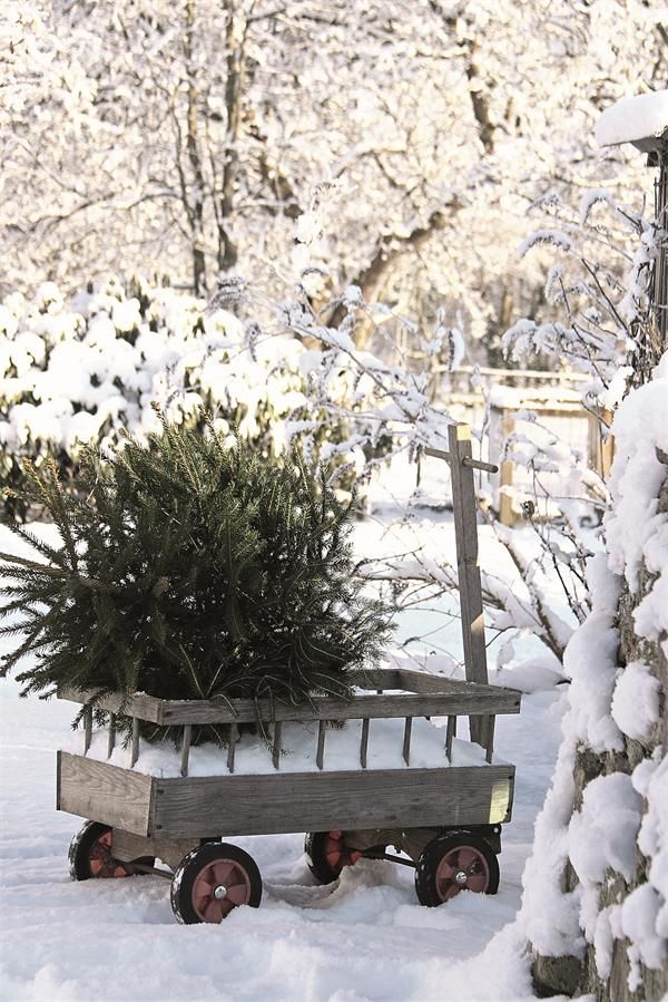 Snowfall and evergreens ~ love what all the seasons bring