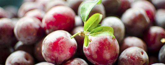 Plommon eller krikon? - Frukt, Fruktodling, Plommon, Krikon, Recept, Mat