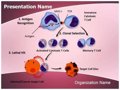55 best cancer powerpoint ppt template images on pinterest ppt make a great looking ppt presentation quickly and affordably with our professional immune system cytotoxic t cells powerpoint template toneelgroepblik Image collections