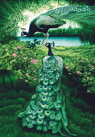 Peacocks..beautiful