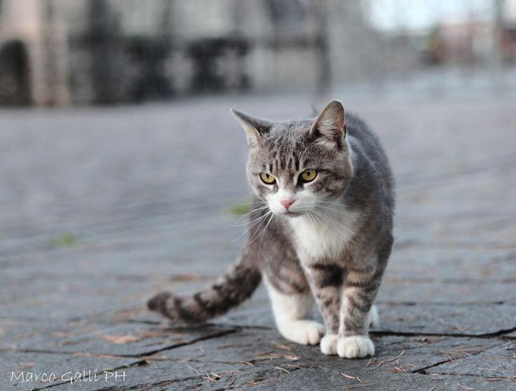 Arredamento gatti ~ Oltre 25 fantastiche idee su baffi di gatto su pinterest gattini
