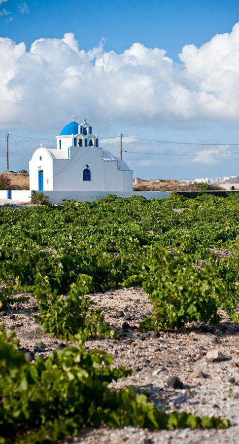 Vineyards in Akrotiri, Santorini
