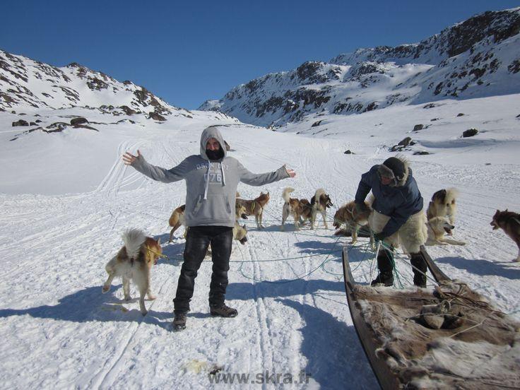 Chiens de traineau dans les montagnes enneigées de Sisimiut, Groenland