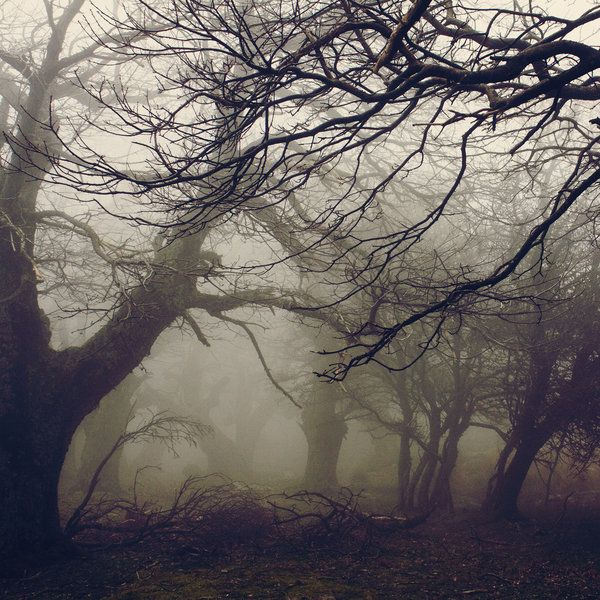 mykindafairytalee:    Walnut forest by *vbagiatis