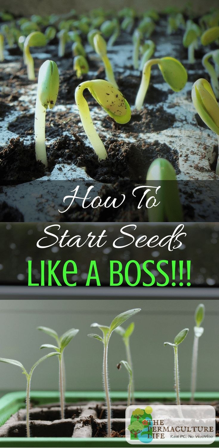 Seed starting isn't hard, can be done any time of year indoors. It can give your annual veggies more of a chance, and is cheaper than buying nursery starts