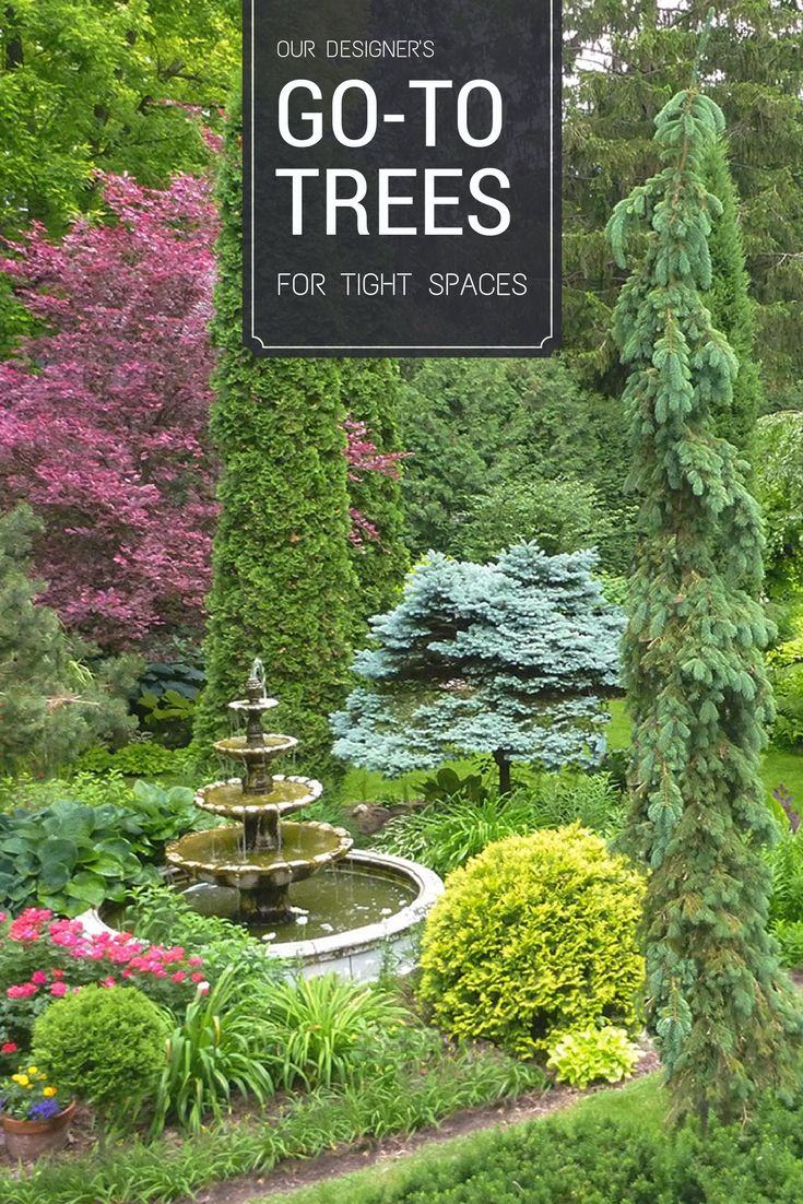 Inexpensive Landscaping Shrubs : About landscaping shrubs on landscape design inexpensive