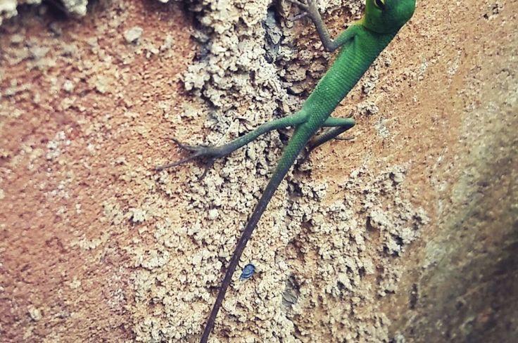 Green Colour baby Lizard