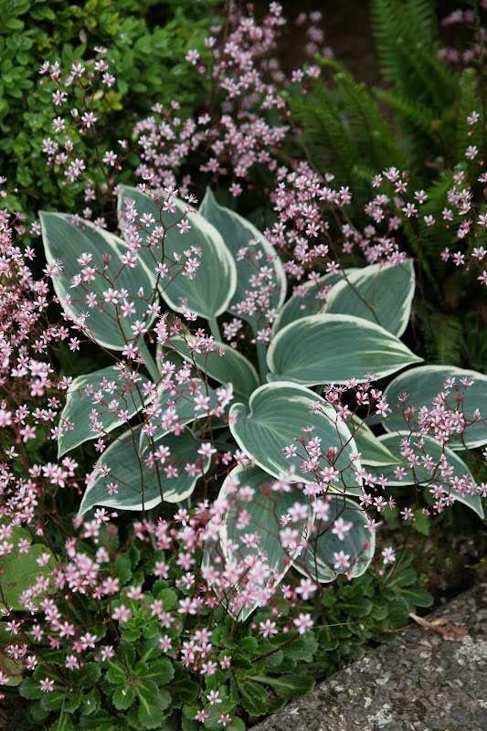 Vinneren ble en drømmende miks av bladplanten Hosta og en yndige sildre. Gratulerer Kenneth / Hageliv! Takk til alle som har bidrat, veldig inspirerende å se sammenplantningene deres :)