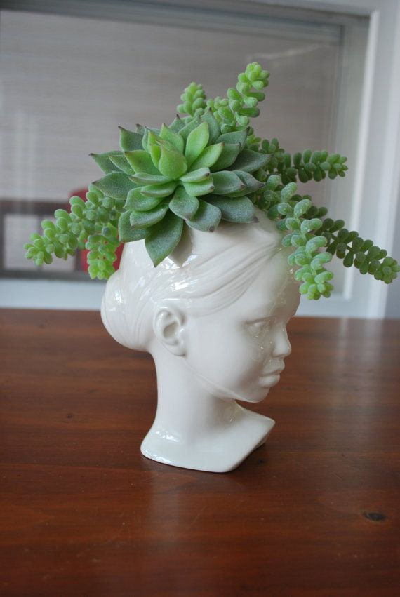 Cermaic head vase with succulents