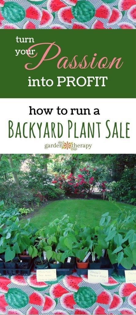 Tips from a Plant Sale Pro on how to start your own backyard growing business