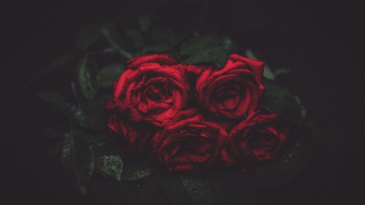 Love Symbol Red Roses Download free addictive high quality photos,beautiful images and amazing digital art graphics about Nature / Landscapes.