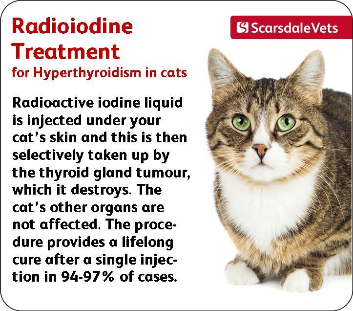 Hyperthyroidism in Cats - Causes, Symptoms & Treatment ...