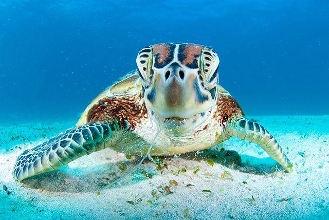 La plongée en Nouvelle-Calédonie