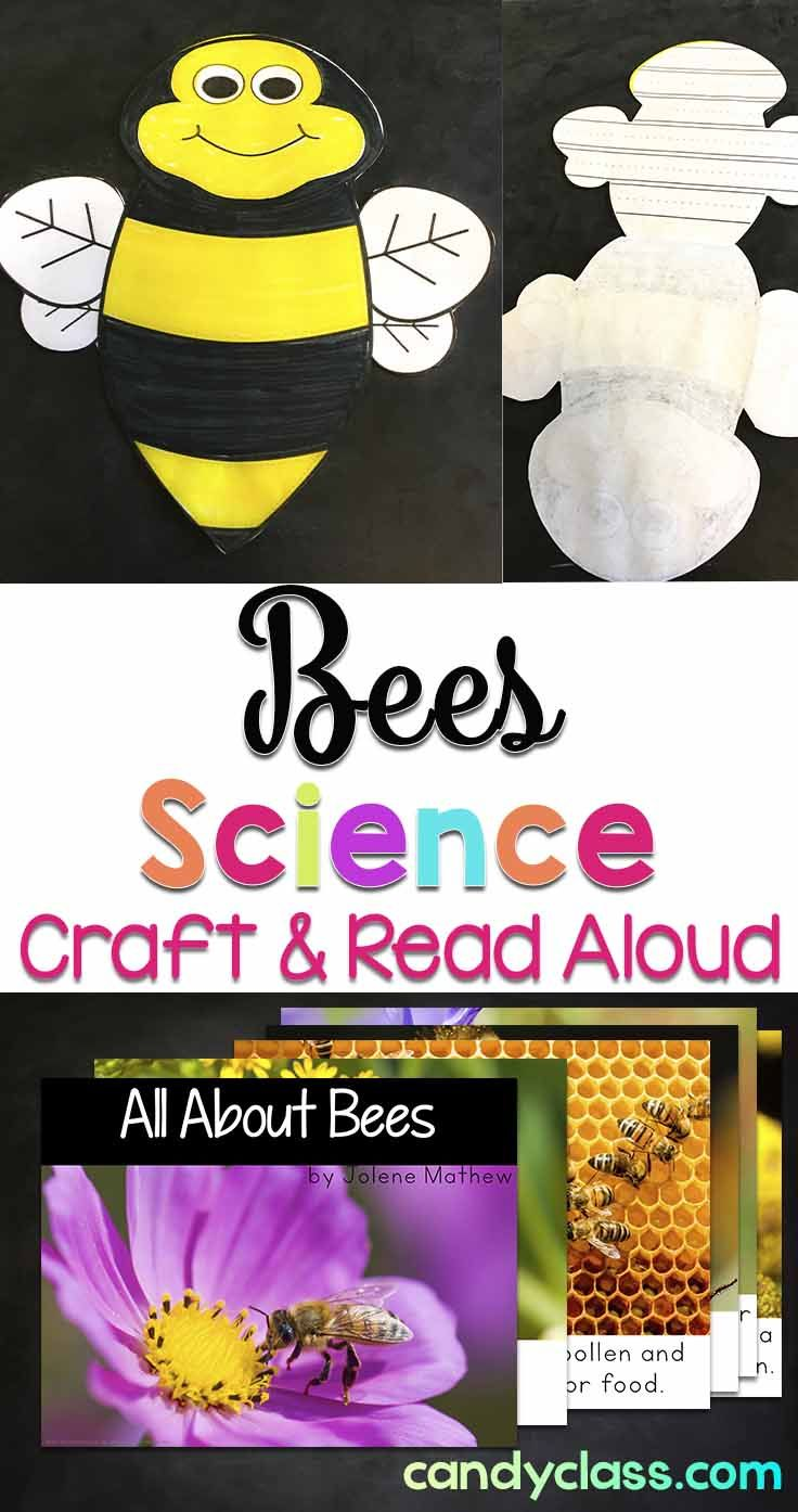 Add some spring science fun with this bee craft and read aloud book! Project the non-fiction book on your Smartboard or print it. The reading response craftivity comes with different writing line options for differentiating for kindergarten, first grade, and 2nd grade classrooms.