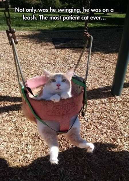35 VERY Funny Animal Pictures