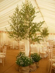 indoor tree wedding decorations - Google Search