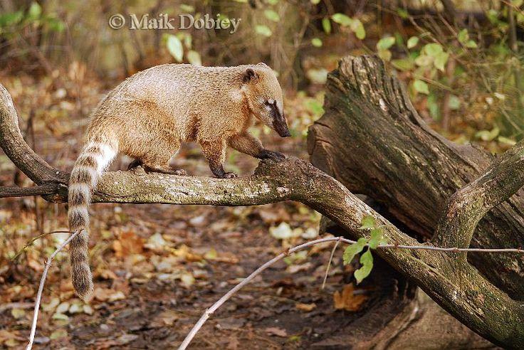26 best Rainforest Animals & Creatures images on Pinterest ...