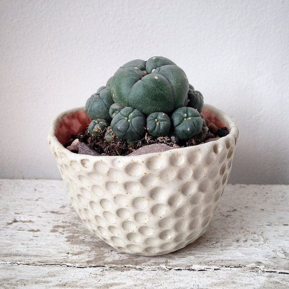 Handmade small ceramic circle planter-ceramic by Kabinshop on Etsy