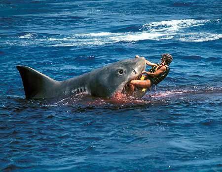 Shark culling Australia | October | 2011 | Tyson Adams