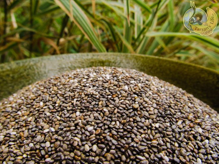 Chia seeds / Chia semínka  http://www.tarzanslife.cz/