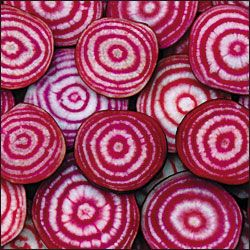 Red circumferences of Chioggia beets.
