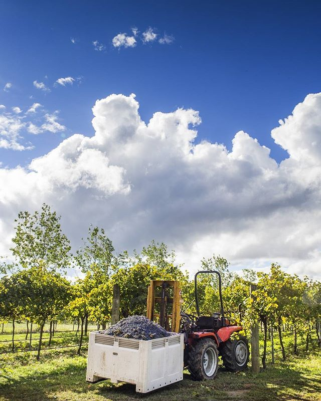 The Canberra District Wine Region is celebrating the 2016 vintage with a week-long program of wine tastings, food and wine dinners and other special events which will culminate in the annual Harvest Festival at most cellar doors this weekend. There will be vineyard and winery tours, winemaking presentations and hands-on activities such as barrel tastings and foot stomping. In fact, at Jeir Creek Winery you can join the winemaker Rob Howell for a vertical tasting of Muscat and they will also…