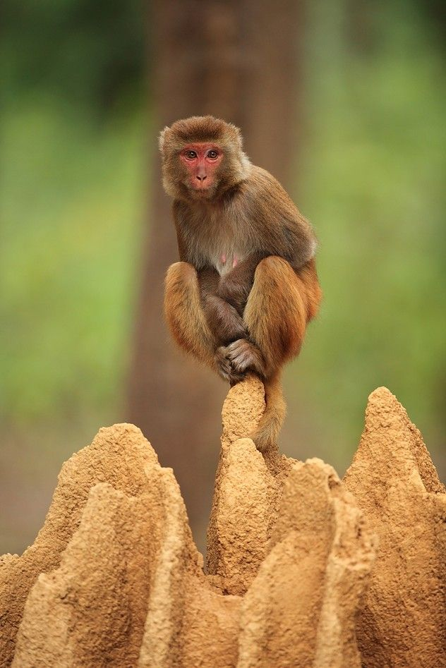 Photo and caption by sanjeev bhor    Smile PleaseMonkeys Sitting, Monkeys Business, Animal Kingdom, Wildlife Photography, Termites Mounds, Monkeys Mamba, Funny Monkeys, Planets Earth, Lonely Monkeys