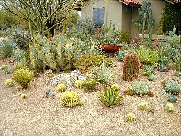 Desert Garden Ideas awesome desert landscaping ideas youtube 431 Best Desert Landscaping Ideas Images On Pinterest