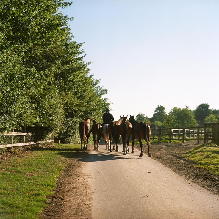 Horseback through the countryside at Coworth Park | smithandfamily.co.uk
