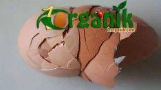 Yumurta Kabuğunun Faydaları ve 6 Parlak Kullanım Yeri
