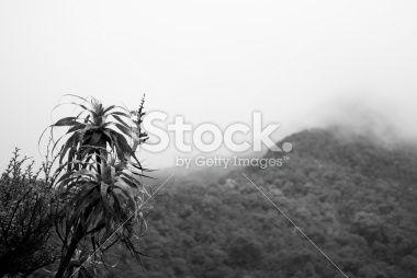 Mountain Neinei with Distant Mist, The Kahurangi National Park Royalty Free Stock Photo