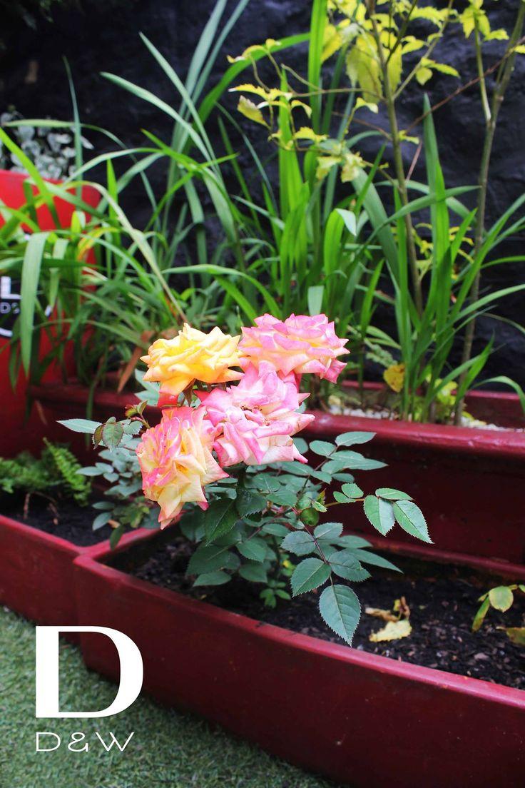 Empezamos el dia cuidando nuestro jardin... #Gardening #DDW http://daniel.com.co/fotos/ambientes | Reservas: 2493404