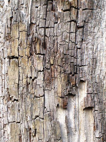 weathered wood  (by hildaDS)