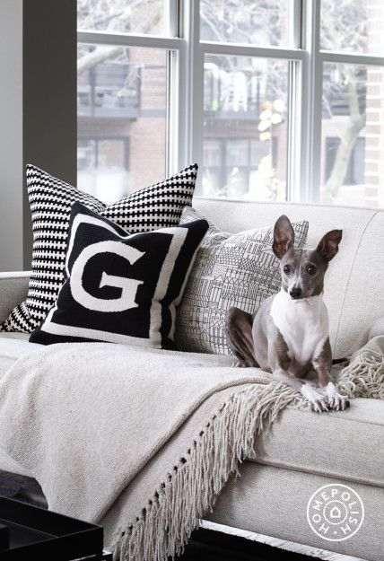 Chic and Modern in Chicago - The sofa from Room and Board gets four out of four paws of approval.