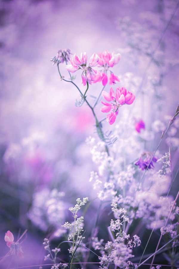 Floral Wallpaper For Iphone 5 The Beautiful Violet Purple And Pink Found In Nature