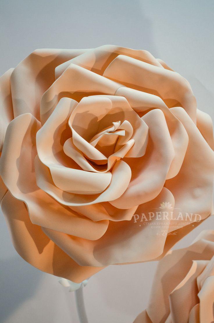 Нежные персиковые розы