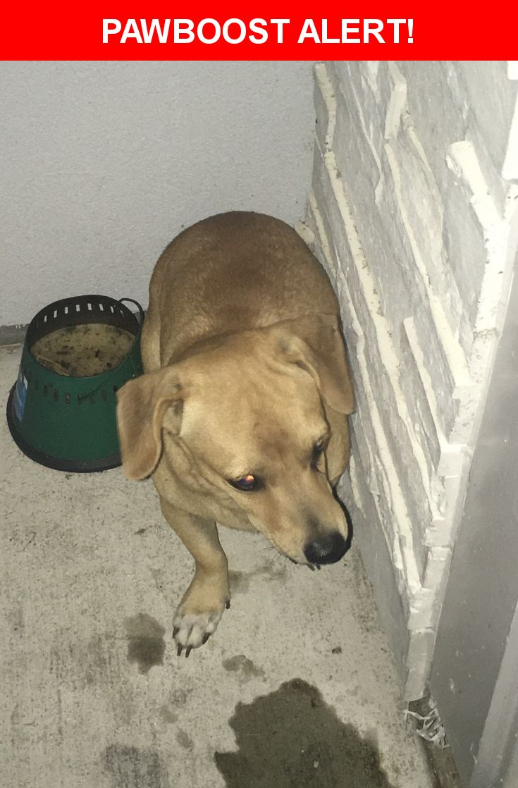 Is this your lost pet? Found in Corpus Christi, TX 78418. Please spread the word so we can find the owner!  Description: Was on my front door will not move away or leave at all but a little aggressive & I have shall child   Nearest Address: 221 Mediterranean Drive, Corpus Christi, TX, United States