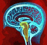 Reticular Activating System: Your inbuilt Success Tool! The Reticular Activating System (RAS) Is a combination of nuclei available in the human brain which decides on which thing a person has to react to. The concept of RAS is extremely important for motivational experts as they always emphasize the importance of clarity of objectives.