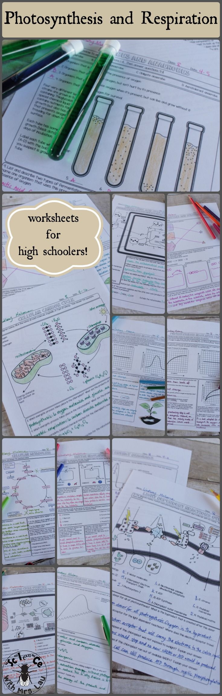 A huge set of photosynthesis and respiration homework pages - perfect for reviewing a whole unit of cellular energetics. Science with Mrs. Lau